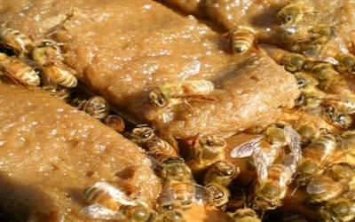 Μελισσοτροφές και κίνδυνοι