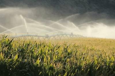 Απαιτήσεις καλλιέργειας καλαμποκιού για υψηλή απόδοση